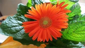 Τα φυτά που καθαρίζουν τον αέρα του σπιτιού σας