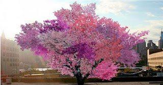 Το δέντρο που παράγει 40 διαφορετικούς καρπούς