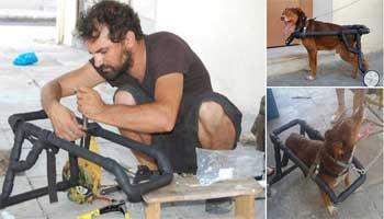 Αυτός είναι ο Έλληνας που κάνει ανάπηρα σκυλάκια να περπατήσουν