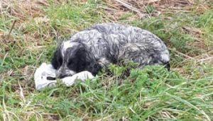 Σκυλίτσα φιλούσε σακούλα με νεκρά κουτάβια