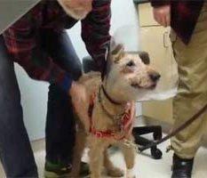 Τυφλός σκύλος βλέπει για πρώτη φορά την οικογένεια του